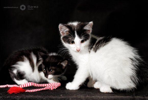 Kocia rodzina