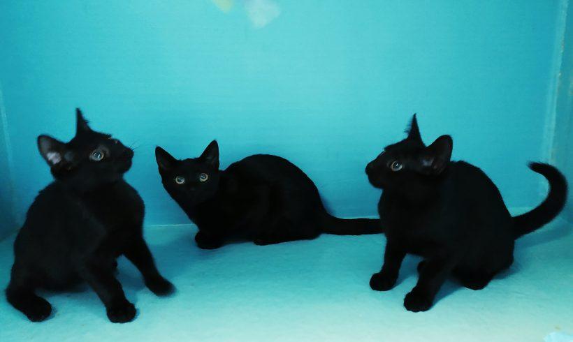 Czarne rodzeństwo