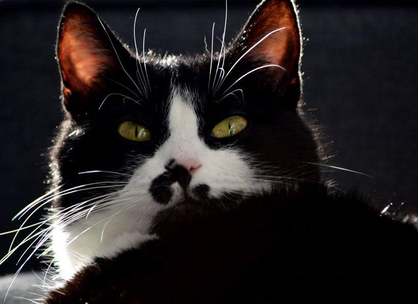 Mama kociaków